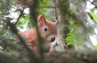 Squirrel Spotting Walk